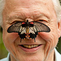 David Attenborough's Rariteitenkabinet